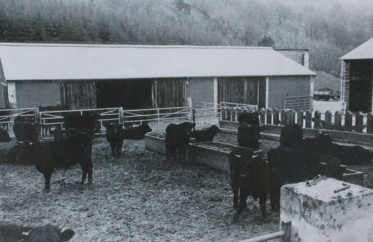 1975 Sale Catalogue - Cattle in Yard