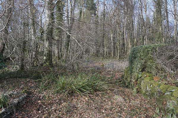 Coed-y-Moch Lodge (The remains of the old Driveway to Nannau)