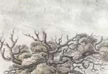Derwen Ceubren yr Ellyll - 1813 Engraving by John Parry