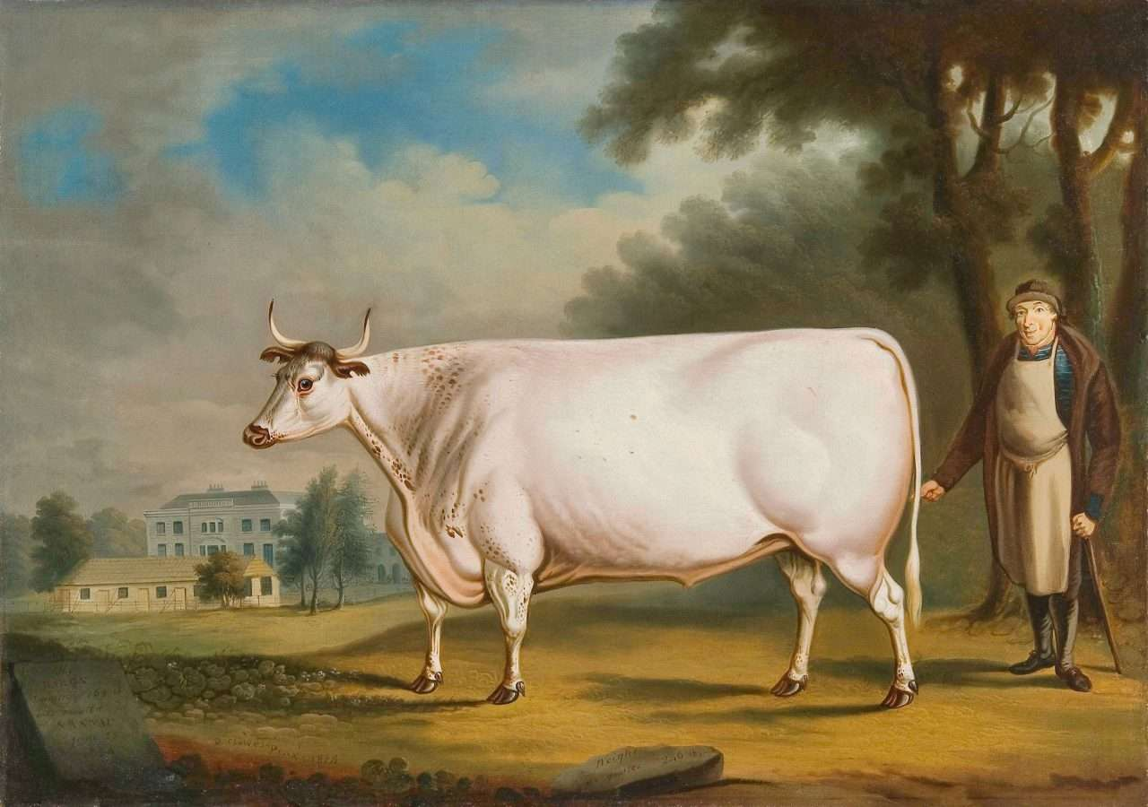 The White Ox of Nannau (Courtesy of The National Museum of Wales)
