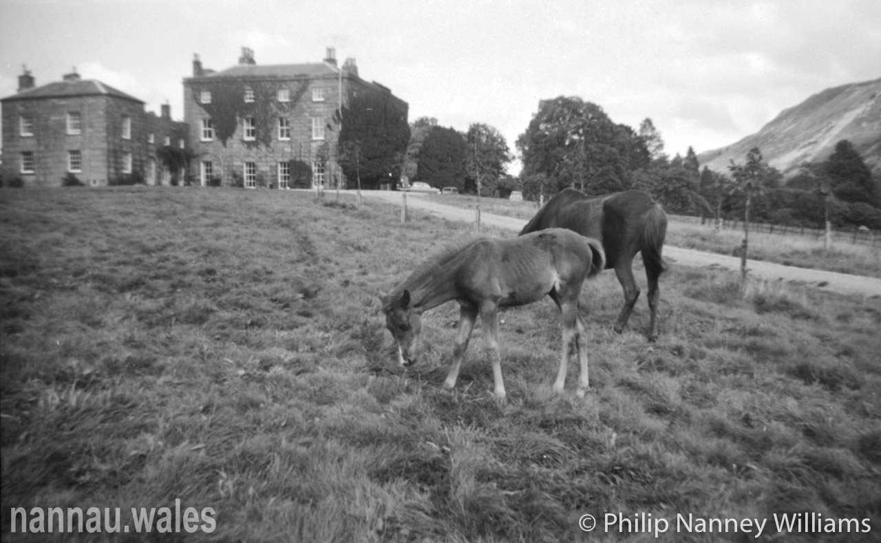 A Horse and Foal at Plas Nannau Hall