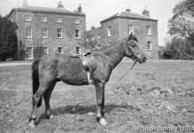 A Horse at Plas Nannau Hall