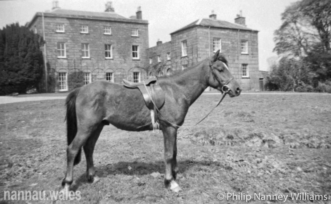 A Horse at Plas Nannau Hall