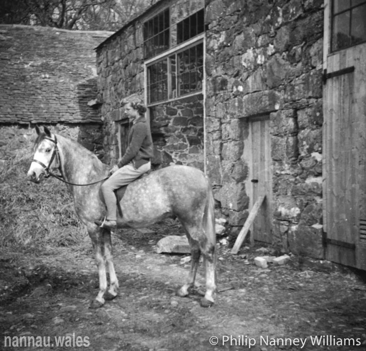 A Horse by the Stables at Plas Nannau Hall