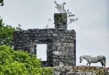 A Horse by The Nannau Summer House